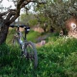 olive-touch-edukativni-gastro-i-wellness-programi
